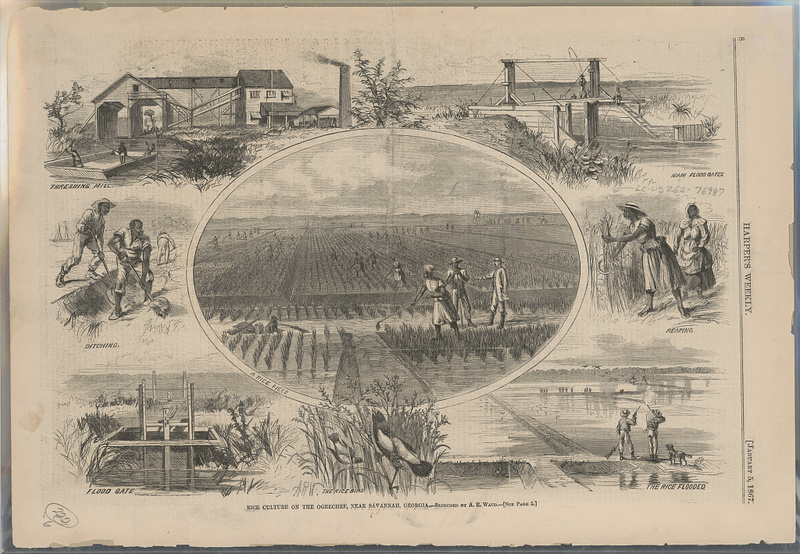 """Rice culture on the Ogeechee,"" Georgia, illustration by A. R. Waud, Harper & Brother, New York, 1867, courtesy of Library of Congress."