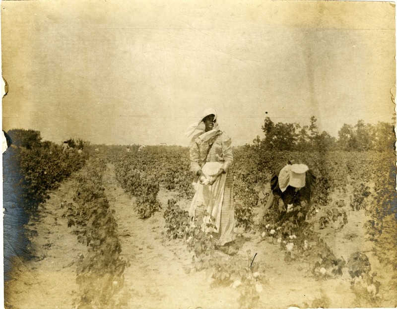 Women picking cotton, Summerville, South Carolina, 1910, courtesy of College of Charleston Libraries.