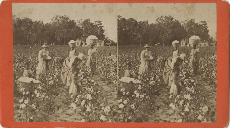 A group of enslaved women and children picking cotton, courtesy of the Avery Research Center at the College of Charleston.