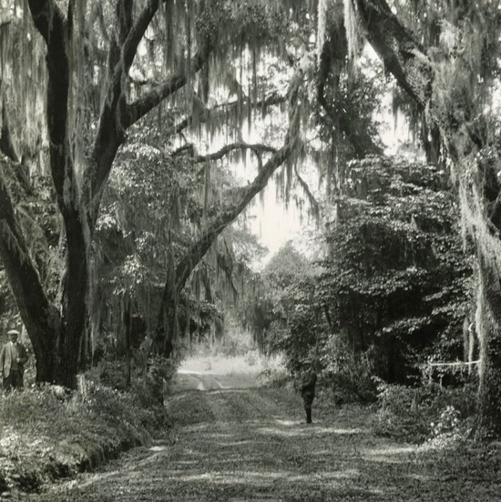 Oak-lined avenue on a lowcountry plantation, photography by Morton Paine, Yeamans Hall Plantation, South Carolina, 1920, courtesy of The Charleston Museum Archives.