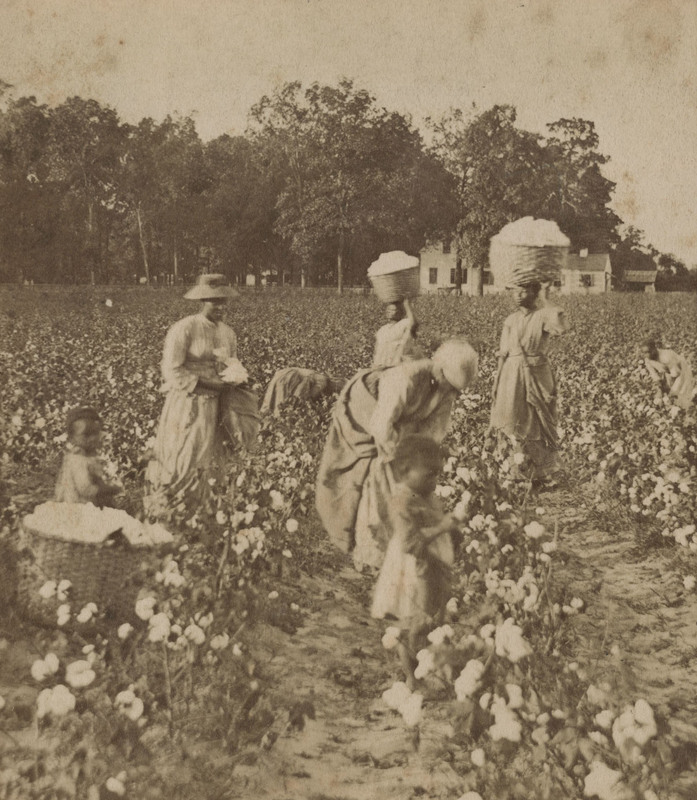 Stereo card depicting women and children working in a cotton field, courtesy of Avery Research Center For African American history and culture.