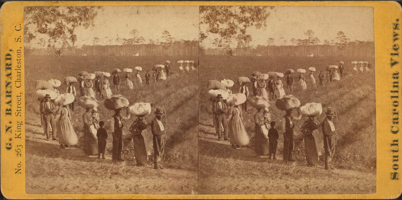 Laborers returning at sunset from picking cotton, Mount Pleasant, South Carolina, photograph by George N. Barnard, ca. 1861-1880, courtesy of the Photography Collection, New York Public Library.