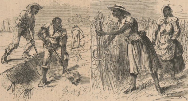 "Illustration depicting gendered labor from ""Rice Culture on the Ogeechee,"" A.R. Waud, Savannah, Georgia, 1867, courtesy of Library of Congress."