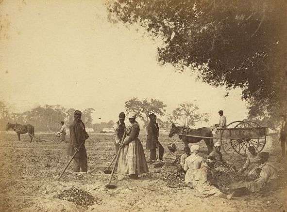 A group of workers planting sweet potatoes, photograph by Henry P. Moore, Hopkinson's Plantation, Edisto Island, South Carolina, 1862, courtesy of the Library of Congress.