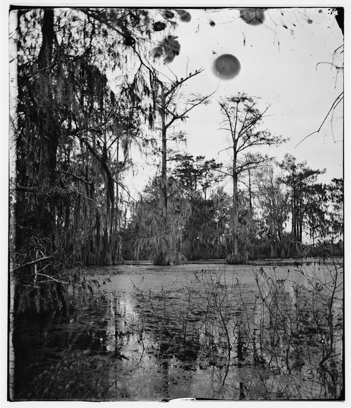 Cypress Swamp, Port Royal, South Carolina, 1865, courtesy of the Library of Congress.