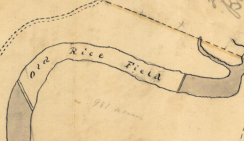 Detail of plat depicting former rice fields, 1799, courtesy of McCrady Plat Collection, Charleston County RMS.