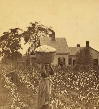 Woman carrying a bale of cotton on her head, photograph by O. Pierre Havens, Savannah, Georgia, circa 1850s, courtesy of the New York Public Library Digital Collections.