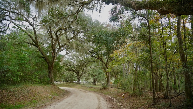 Present-day Dixie Plantation Road, photograph by Cappy Yarbrough, Stono Preserve, 2019.