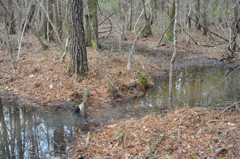 Former site of Jericho Plantation, image by Hayden Smith, Bethera, South Carolina, 2014.