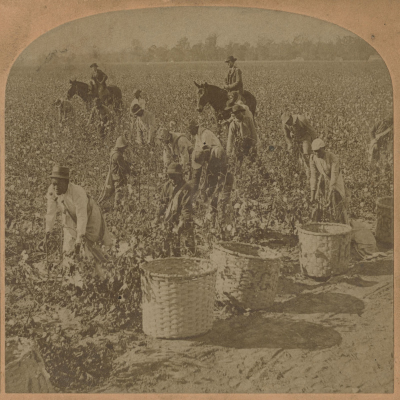 A stereoscopic image of African American enslaved people picking cotton in a field with two overseers on horseback, photograph by B.W. Kilburn, 1862, courtesy of the Beaufort County Library.