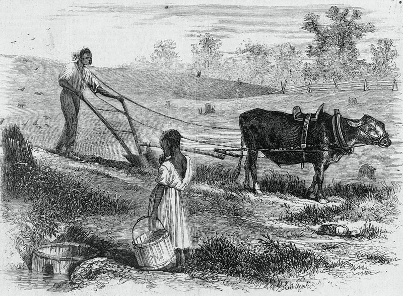 """Plowing in South Carolina,"" 1866, sketch by James E. Taylor, <em>Frank Leslie's Illustrated Newspaper</em>, courtesy of Library of Congress."