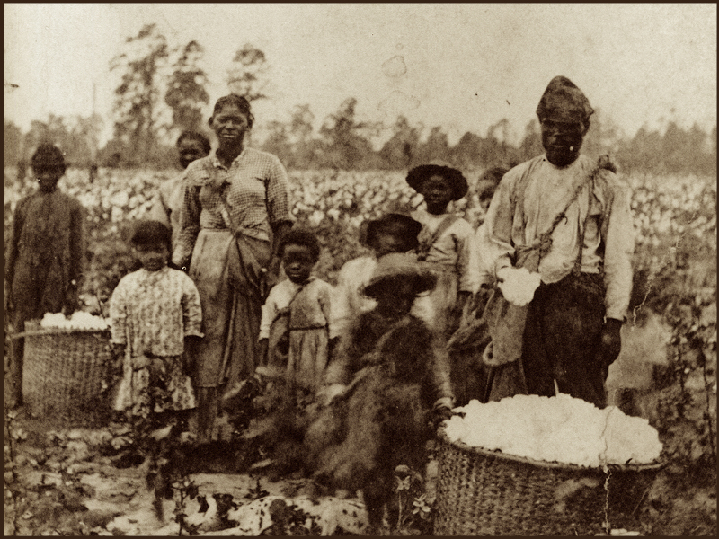Photograph depicting an enslaved family picking cotton, Pierre Havens, Savannah, Georgia, circa 1850s, courtesy of New York Historical Society.