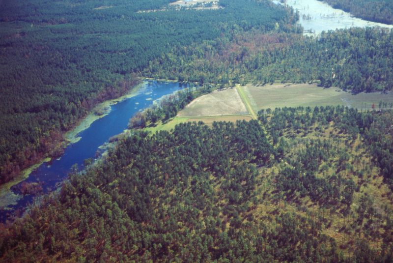 An inland rice reservoir, image by Richard D. Porcher, near the Cooper River, South Carolina, 1995.