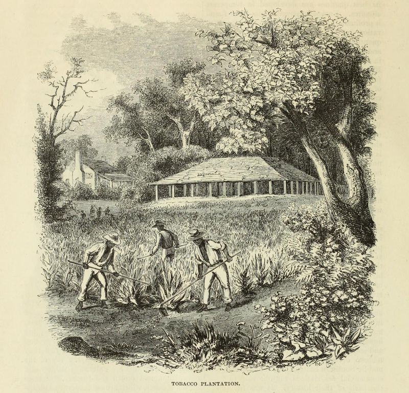 Tobacco Plantation, engraving from <em>Harpers' Weekly</em>, 1855, courtesy of the Internet Archive.