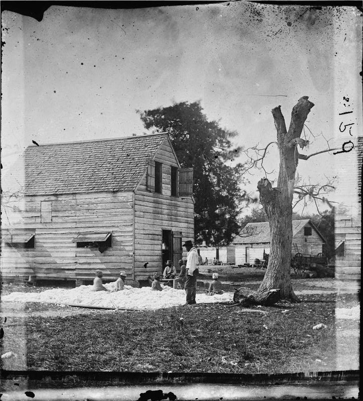 African Americans preparing cotton for the gin, photograph by Timothy H. O'Sullivan, Port Royal, South Carolina, 1862, courtesy of Library of Congress.