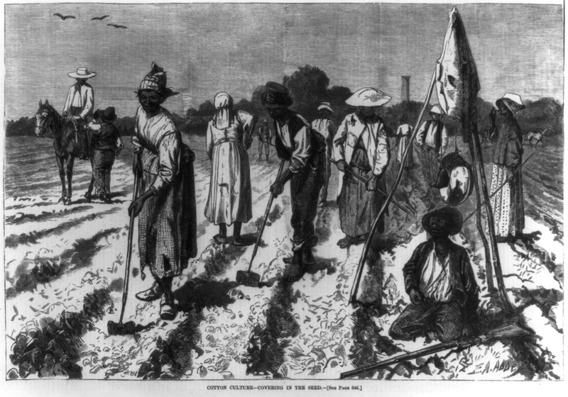 Wood engraving from Harper's Weekly depicting African Americans planting cotton, 1875, courtesy of the Library of Congress.