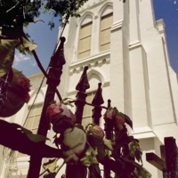 Roses placed on the gate of Emanuel AME Church, Instagram photograph by Jaci Harper, June 20, 2015, Charleston, South Carolina.