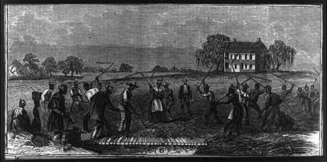 African American workers on Cape Fear River rice plantation, North Carolina, 1866, <em>Frank Leslie's Illustrated Newspaper</em>, courtesy of Library of Congress Prints and Photographs Division.