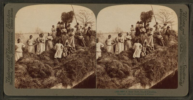 A rice raft, South Carolina, ca. 1895, image by Robert N. Dennis collection of stereoscopic views, courtesy of New York Library Photography Collection.
