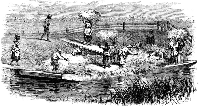 Slaves unloading rice barges at a South Carolinian rice plantation, J. G. Holland Scribner's Monthly, An Illustrated Magazine for the People, 1874, courtesy of the Florida Center for Instructional Technology.