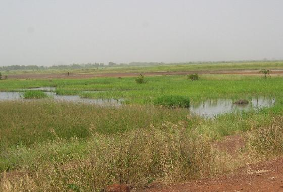 Wetlands near the Gambia River, the Gambia, West Africa, 2003.