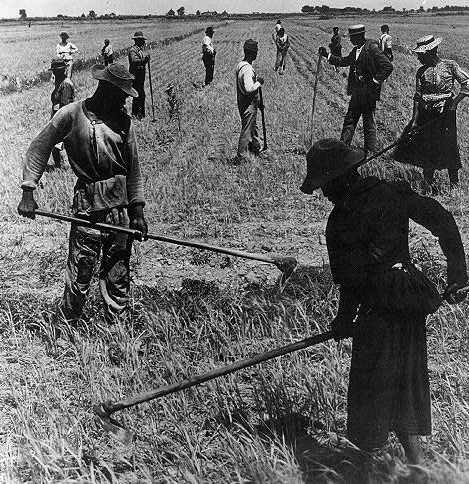 African American workers on a field hoeing rice, South Carolina, ca. 1904, courtesy of Library of Congress Prints and Photographs Division.