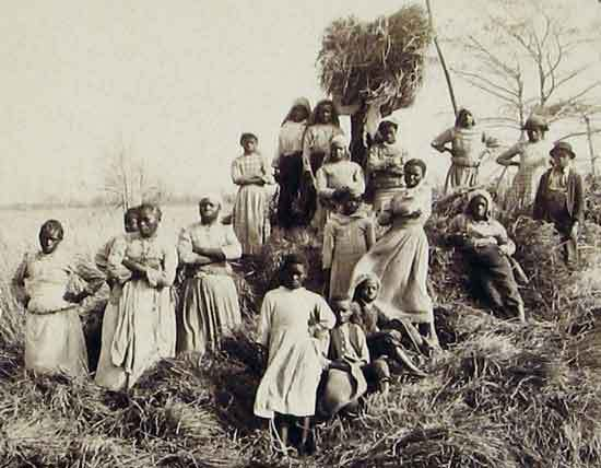 African American laborers on a rice plantation, Georgetown, South Carolina, ca. 1895, courtesy of the South Caroliniana Library, University of South Carolina.