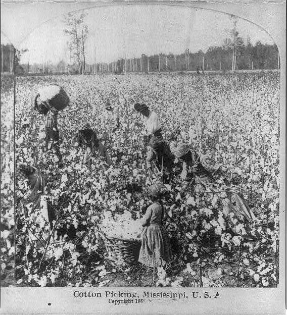 Laborers in a Mississippi cotton field, American Stereoscopic Co., Mississippi, 1896, courtesy of Library of Congress.
