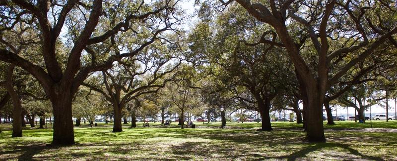 White Point Gardens, photograph by Monica Bowman, Charleston, South Carolina, March 15, 2016.