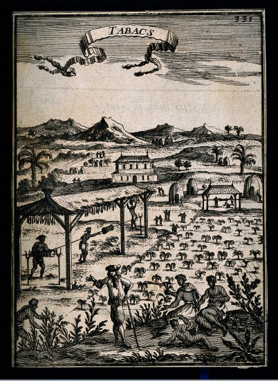 A tobacco plantation with black workers and a white overseer, engraving, circa late 17th century, courtesy of the Wellcome Collection, London.